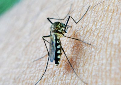 ZIKA VIRUS AND MICROCEPHALY: Our advice to pregnant women and those hoping to get pregnant