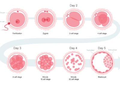 How do embryos develop?